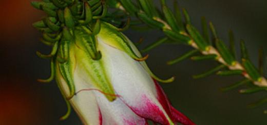 Busselton Flower Show
