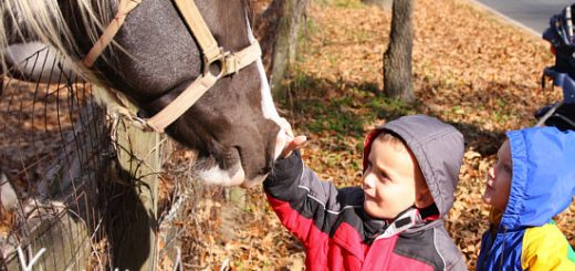 Cam and Silas in Leaves and visiting the horses