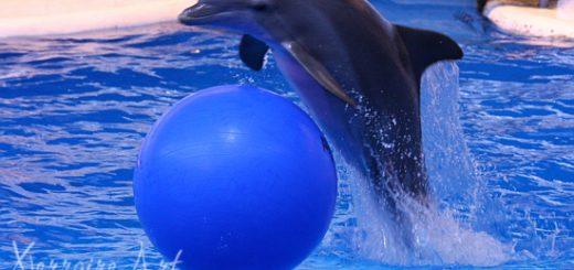 Dolphin at the Aquarium