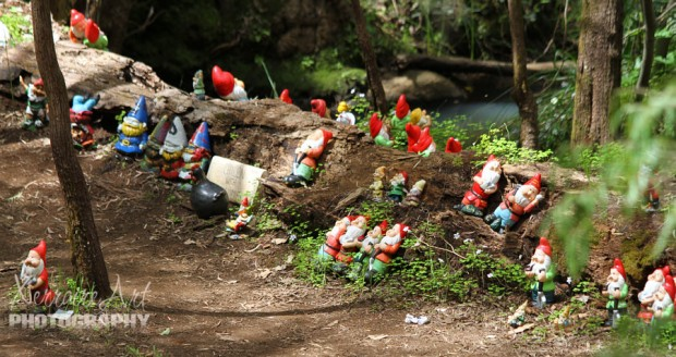 There were Gnomes as far as the eye could see.