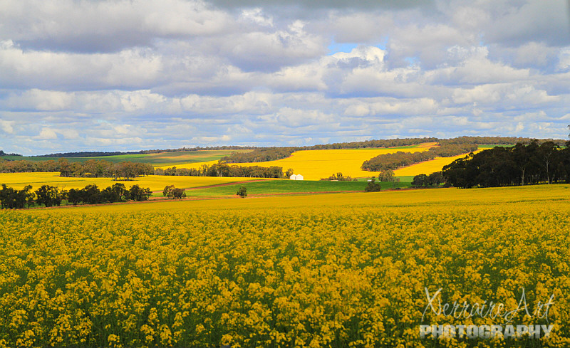 Past the Canola Fields