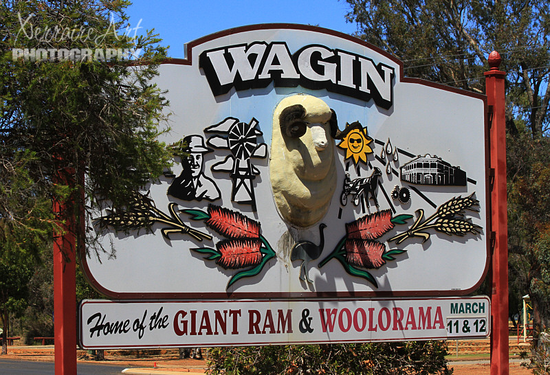 We drove into Wagin, I had heard about it, but we hadn't ever been together.