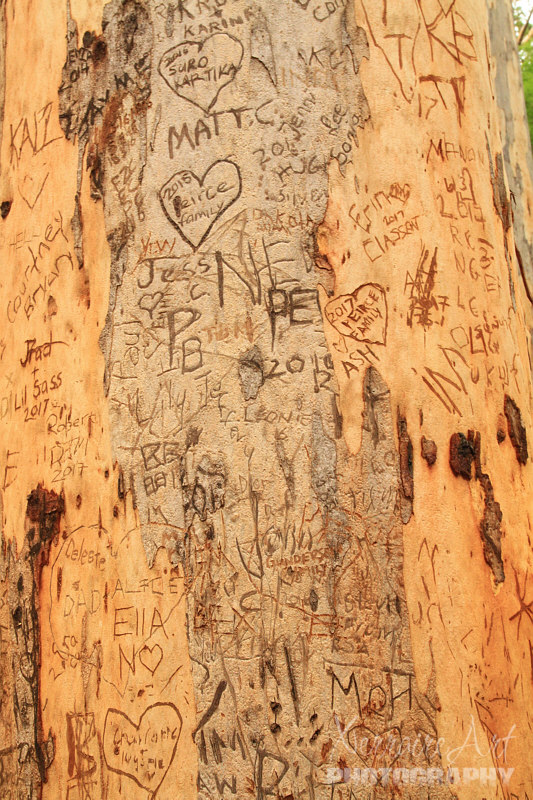 tree with graffiti