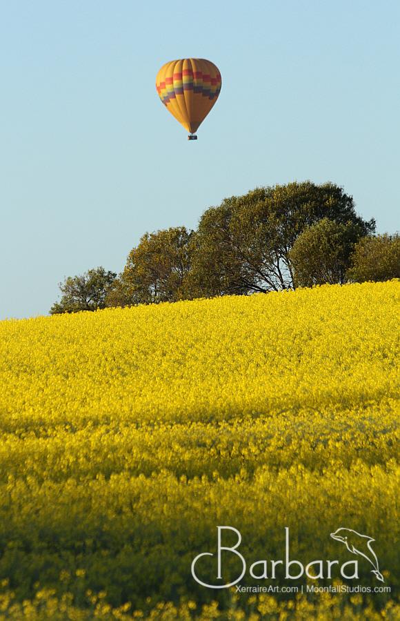 Balloon over canola field