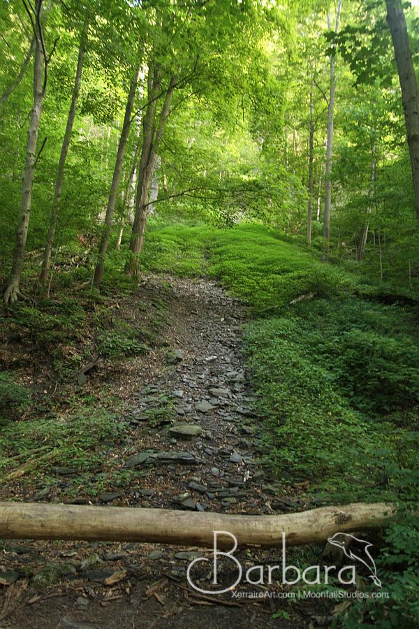 Lush trail.