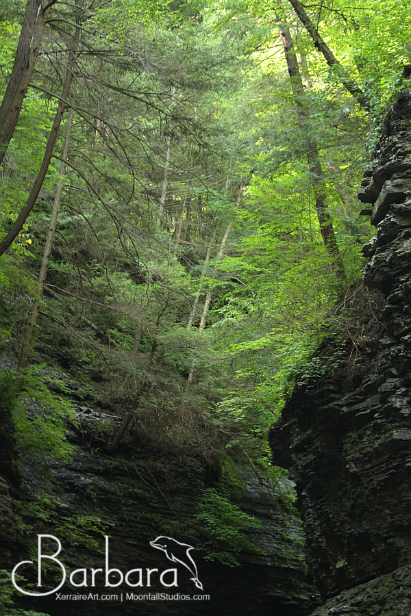 trees on top of the gorge