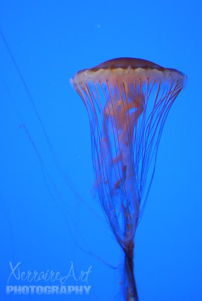 The Aquarium – Third Time is a Charm