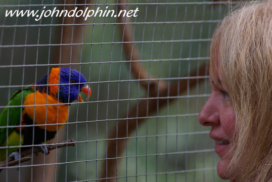 Red collared Lorikeet, who I made friends with