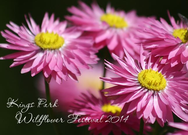 Wildflower Festival 2014