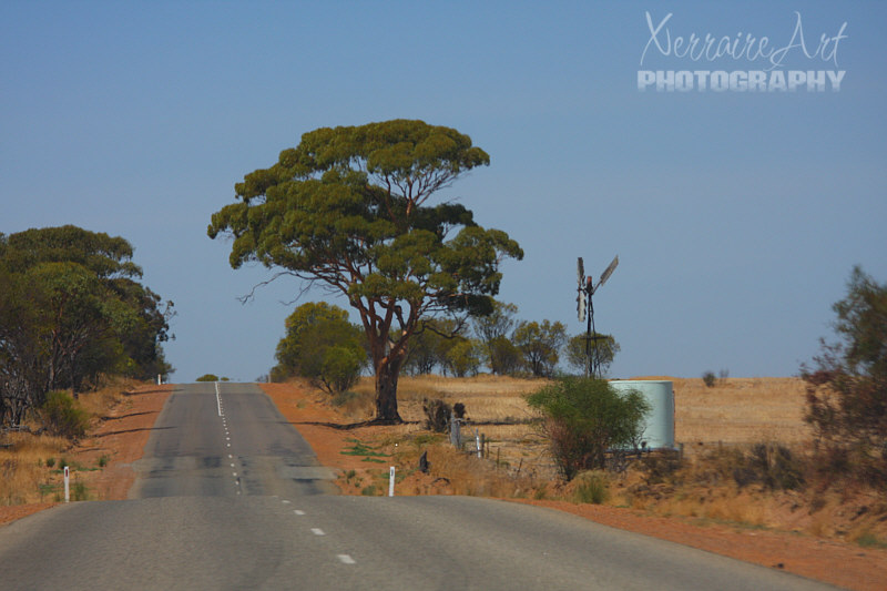 A field, a gum tree, and a windmill. Might have to come back here for a sunset photo. :)