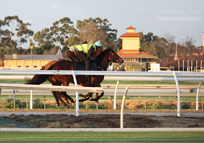...and see some race horse morning runs.