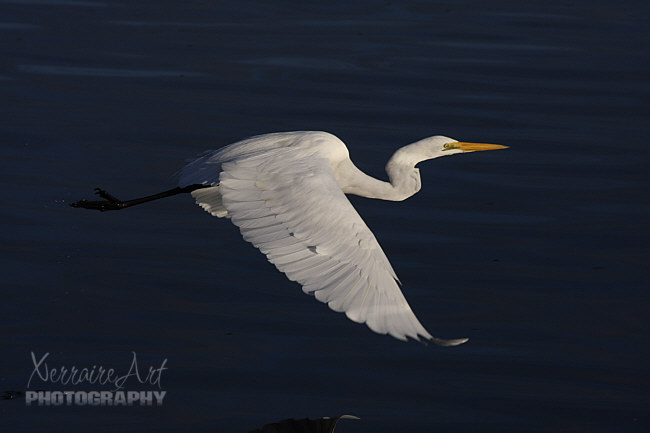 Lovely to see the heron in flight.