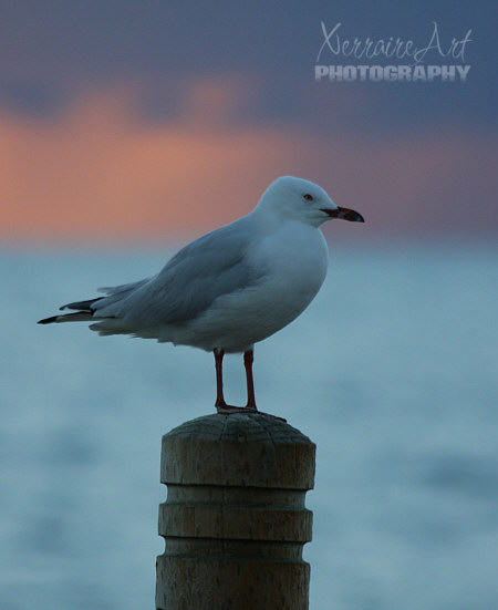This gull seemed to be enjoying the view, he just stood there and let John and I get his picture for a long time.